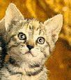 Il Gatto Magico-